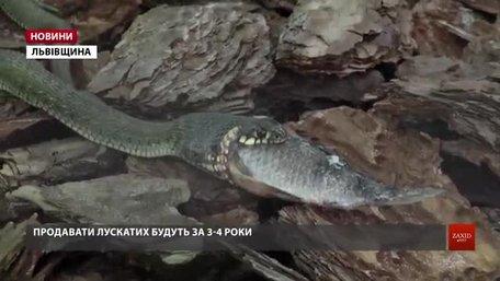 Господарство біля Львова показало зміїну ферму