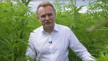 Мер Львова знявся у виборчому ролику на конопляному полі. Відео дня