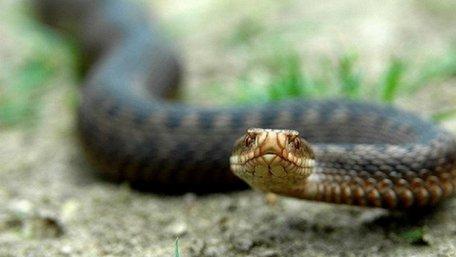 12-річна дівчина з Турківського району потрапила в реанімацію після укусу змії