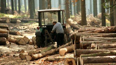 В Україні презентували інтерактивну карту лісових рубок