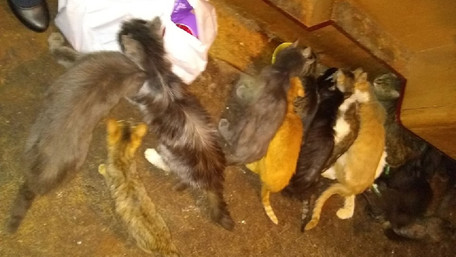 Мертва львів'янка чотири дні пролежала у квартирі з 50 котами