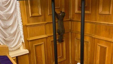 У кулуарах Верховної Ради депутати виявили дику куницю