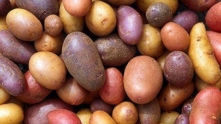 Україна імпортує картоплю. Що відбувається?