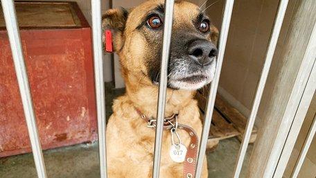 «Понад 80% вуличних собак і котів колись були домашніми»