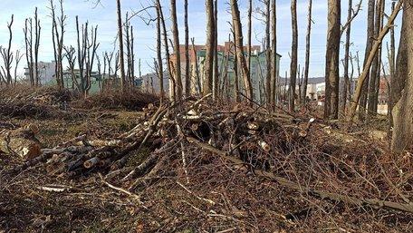 Дерева у винниківському парку перетворили на стовпи, щоб знищити омелу