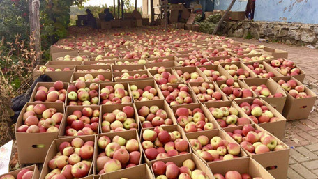 Україна різко збільшила імпорт яблук і скоротила їх експорт