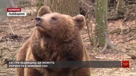1 березня у ведмежому притулку «Домажир» стартує новий сезон
