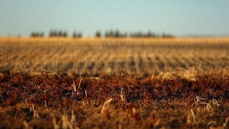 Верховна Рада ухвалила закон про вільний ринок землі