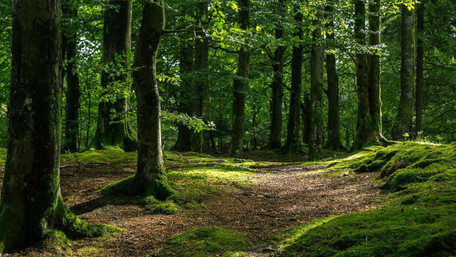 На час карантину у Львівській області  заборонили відвідувати ліси