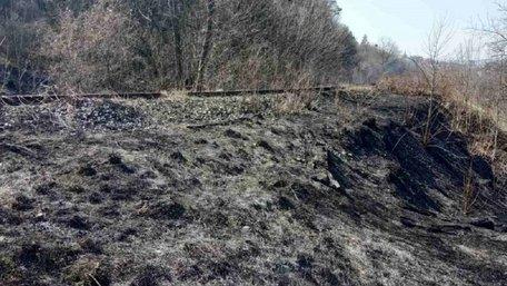 У парку «Знесіння» через підпал вигоріло 4 га заповідної зони