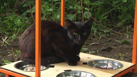 У Львові встановили перші котівнички для безпритульних котів. Фото дня