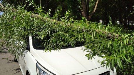 Львів'янин відсудив у мерії 106 тис. грн за повалене на машину дерево