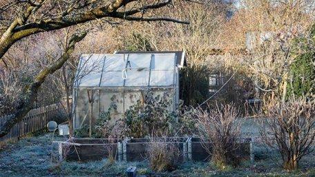 Час наводити порядок: календар робіт у саду та на городі в листопаді