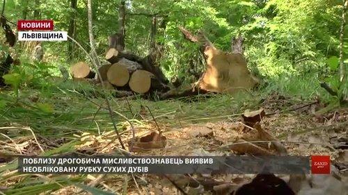 Працівник лісгоспу викрив чергову незаконну рубку поблизу Дрогобича