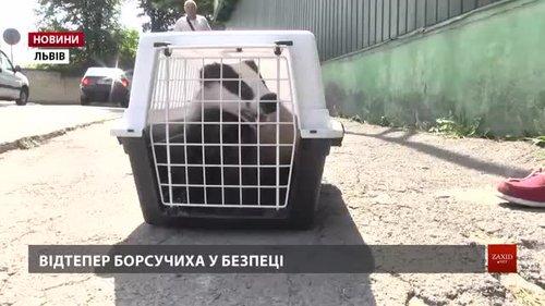 У Львові зоозахисники врятували з неволі борсука