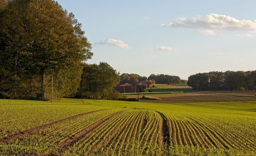 Україна конфісковуватиме землю приватних компаній, що належать росіянам. Під час купівлі-продажу землі будуть прямі корпоративні відносини, що унеможливить купівлю земель компаніями, зареєстрованими в офшорах