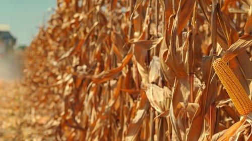 В Україні із незареєстрованих аграрних полів торік зібрали врожаю на 88,5 млрд грн. Найбільше необліченої землі – на Миколаївщині та Одещині