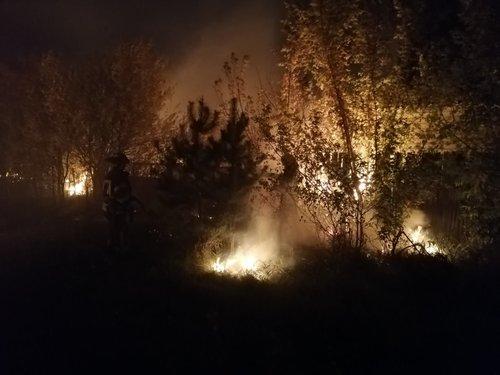 Десятки масштабних лісових пожеж спалахнули на Луганщині (фото, відео)