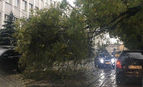Через падіння дерева на вул. Вітовського не курсують трамваї. Трамвай №3 тимчасово не курсує, в трамваї №4 та №9 їдуть за зміненим маршрутом
