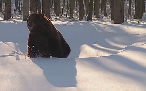Ведмідь Потап уже прокинувся із зимової сплячки