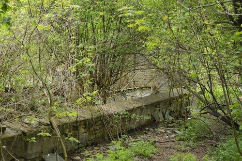 У парку «Залізна вода» є закинуті теплиці з ХХ ст.