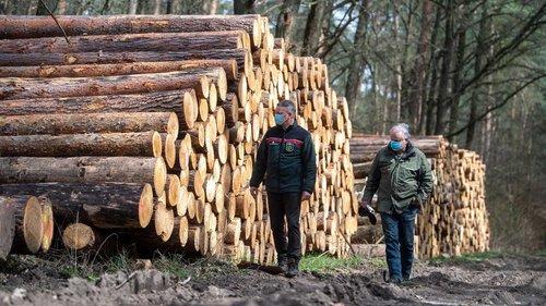 В Україні планують зняти заборону на експорт лісу