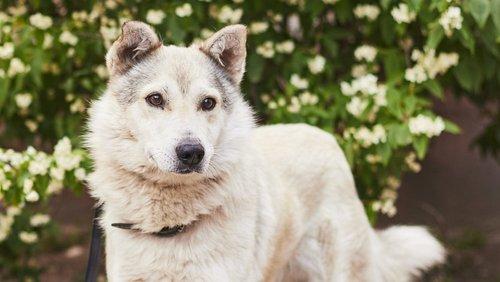 Тримай свою Фортуну: вісім красивих собак у пошуках дому у Львові (фото)