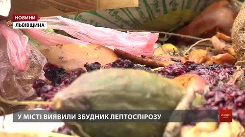 Переповнені сміттєві майданчики у Дрогобичі можуть спричинити спалах лептоспірозу