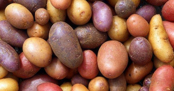 Україна імпортує картоплю. Що відбувається? За лічені тижні ввезли понад 140 тис. тонн. За лічені тижні завезли понад 140 тис. тонн