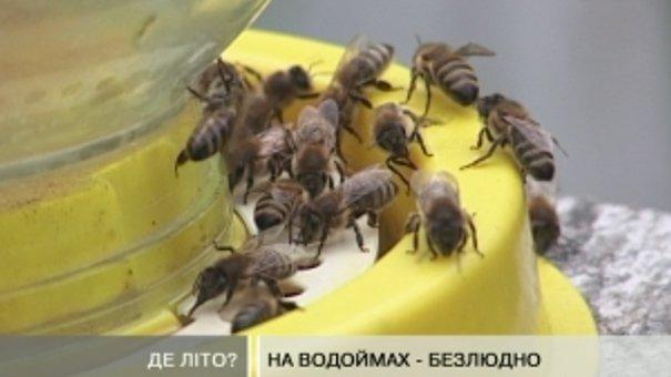 Через погоду бджолам меду замало