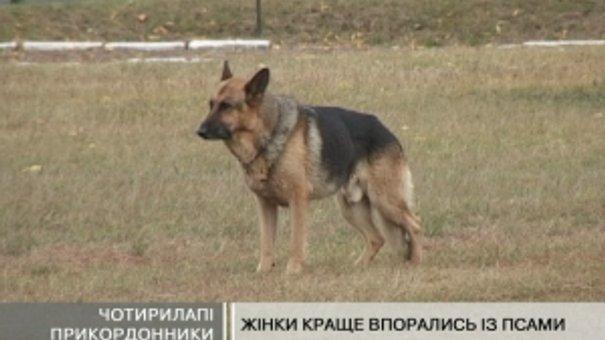 Найрозумніші собаки з 5 країн СНД з'їхалися на Львівщину