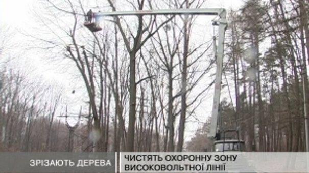 У Львові почали зрізати дерева, які ростуть біля високовольтних ліній електропередач