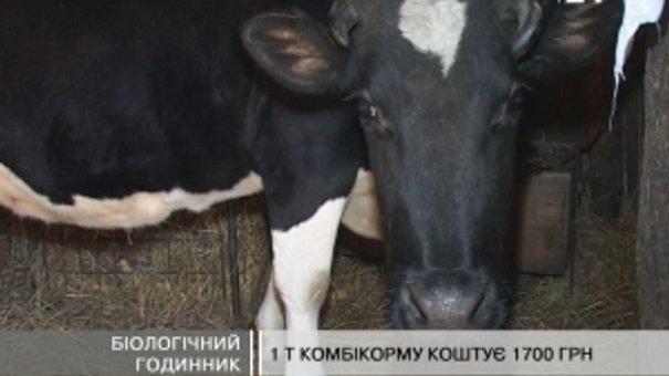 Селяни: Після переходу на літній час надої молока поменшали