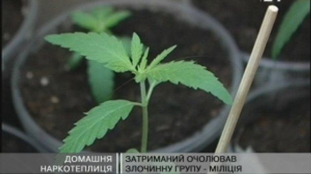 Зловмисник вирощував коноплю у власному помешканні в Трускавці