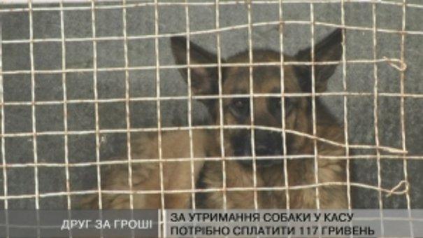 """У ЛКП """"Лев"""" вимагають гроші за тварин"""