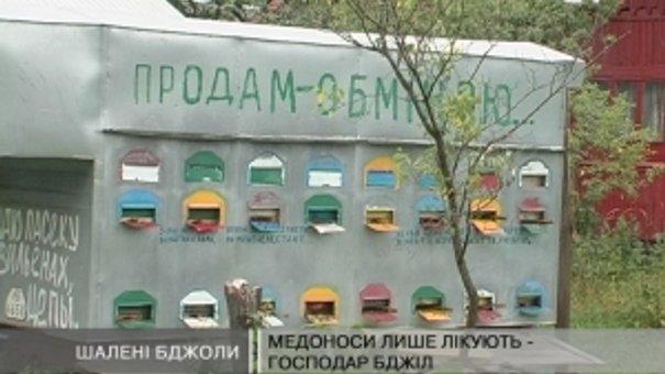 Мешканці села Миртюки вже два роки потерпають від бджіл