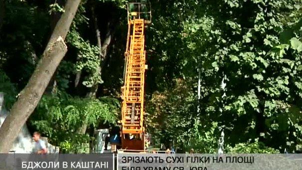 На Святоюрській горі формують крони дерев