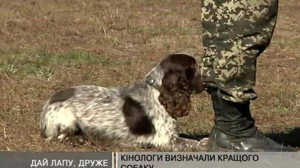 Кінологи визначали найкращого собаку-помічника прикордонної служби