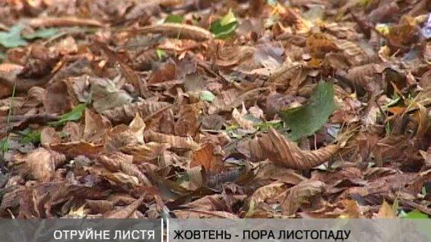 Палене листя негативно впливає на здоров'я людини