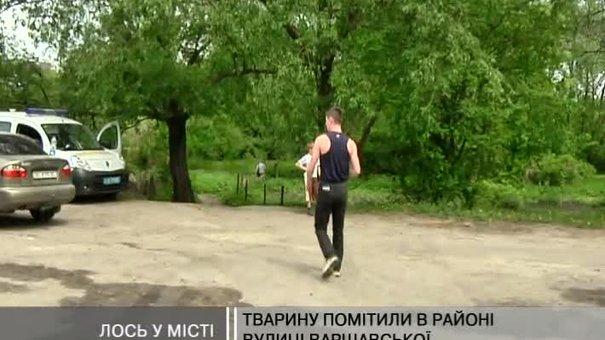 В районі вулиці Варшавської знайшли мертвого лося