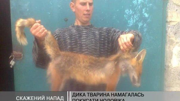 У селі під Жовквою на чоловіка напав скажений лис