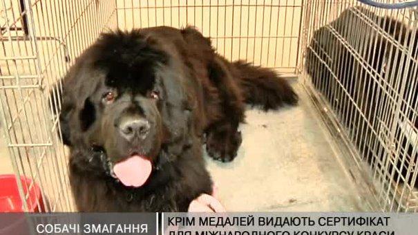 На виставці собак у Львові - представники 128-ми порід