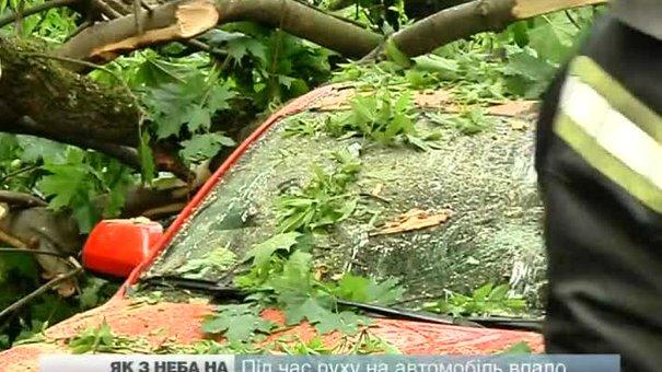 Під час руху на автомобіль впало дерево