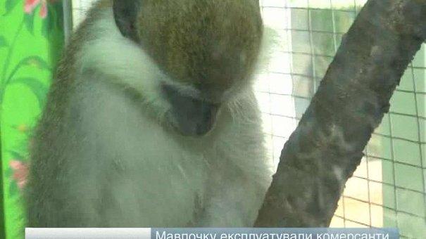 У Львові знову намагалися поневолити мавпочку Гаріка та «депортувати» її у Крим