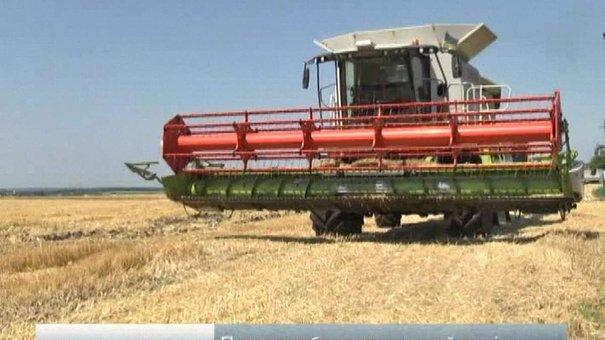 Врожай зернових культур на Львівщині буде кращим, ніж минулого року