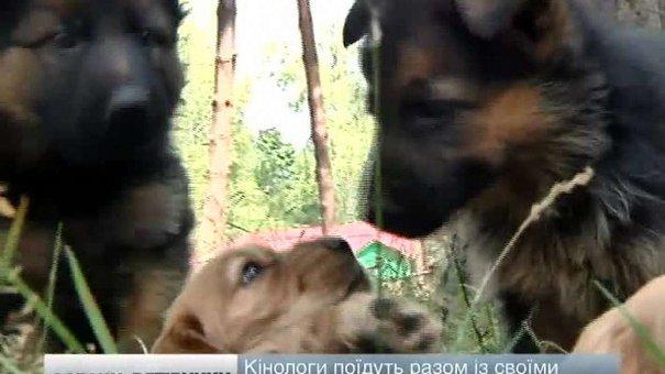 На Львівщині готують собак для допомоги військовим у зоні АТО