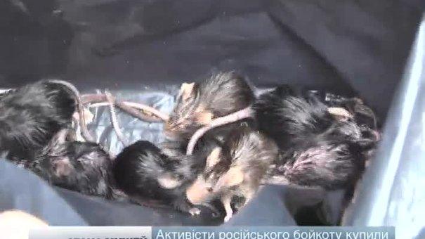 У львівському супермаркеті активісти випустили на полиці з російськими товарами мишей