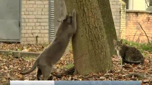 У Львові місцеві депутати заборонили вилов безпритульних котів
