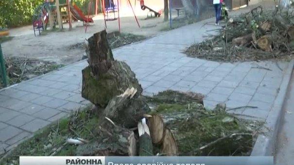 У Львові на вулиці, де впало дерево, перевірять усі інші