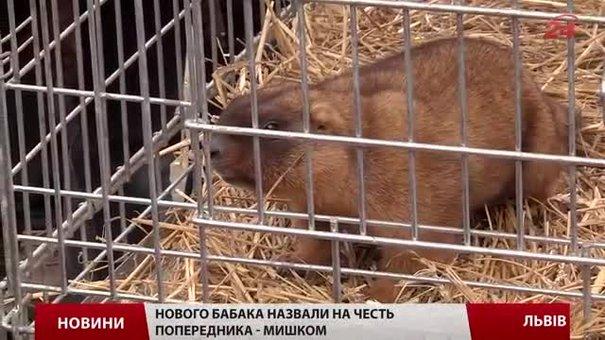 Львівські тварини віщують прихід весни через чотири тижні